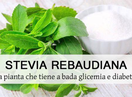 """La Stevia, la pianta che """"tiene a bada"""" glicemia e Diabete"""