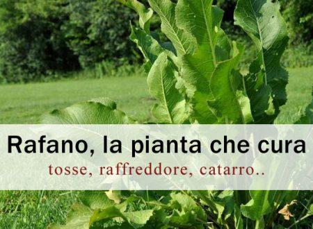 Rafano, la pianta che cura tosse, bronchiti, raffreddore…
