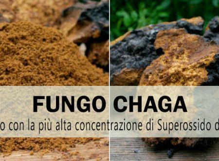 Chaga, il fungo con la più alta concentrazione di antiossidanti